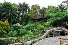 Bali Pulina, coffee plantation, Bali