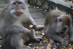 Ubud, Monkey Forest, Bali